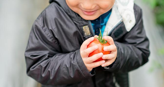 tomato672_tcm237-399412